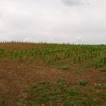 Zabór - powstająca największa winnica w Polsce